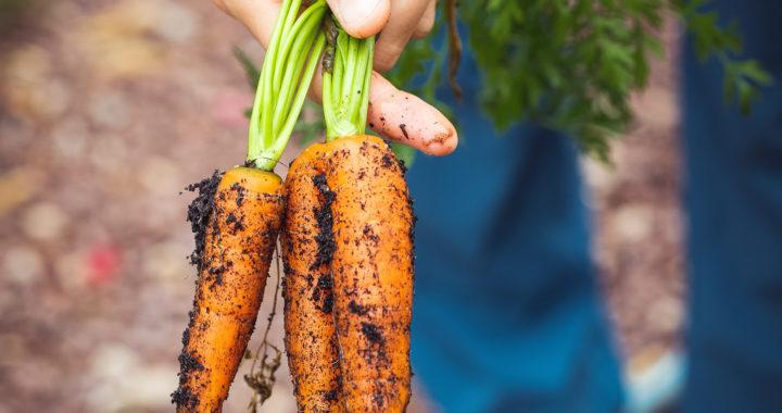 Soil Food Week met Nobelprijswinnaar Rattan Lal en Voedselactiviste Vandana Shiva op 12/10 en op 13/10