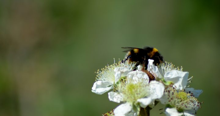 Circulair Friesland ondertekent Bijenpact