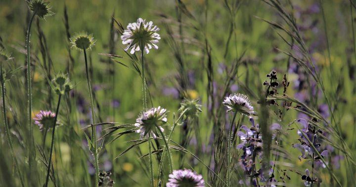 Webinars natuurinclusieve landbouw: kruidenrijk grasland