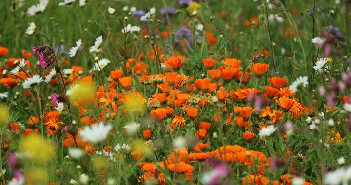 Gezocht: biodiversiteitsinitiatieven uit de regio